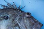 Fish_18