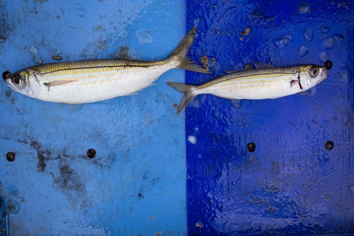 Fish_19