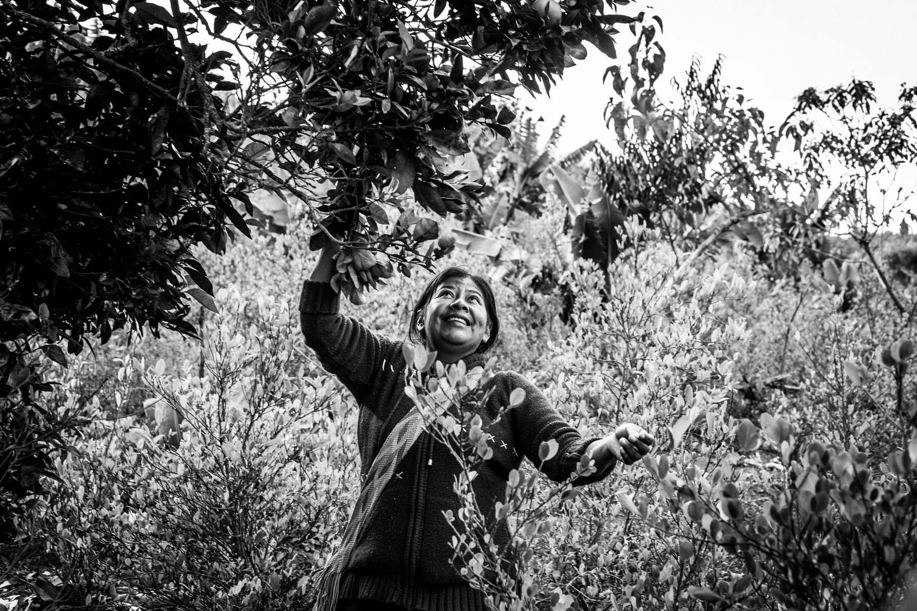 Dominga Mestizo en la finca de Isabel Mosquera Parra (45 años), El Naranjo, resguardo de San Francisco, Cauca, Colombia, Agosto 17, 2018.