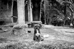 Finca de Emilia Julicue Secue (58 años) el perro Pato, La Estrella, Toribío, Cauca, Colombia. Septiembre 7, 2018.